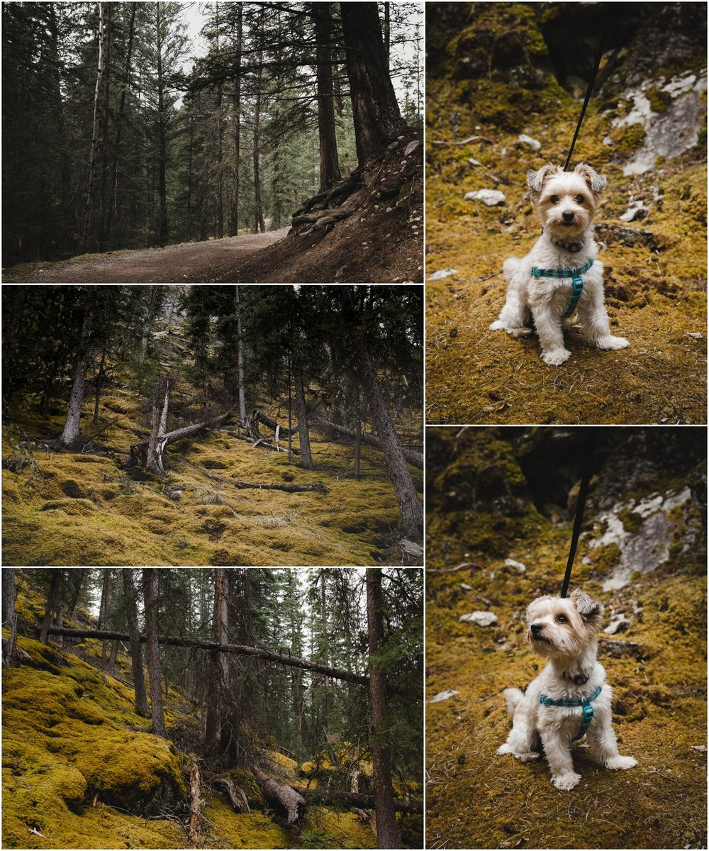 Archer the Adventure Pup had fun exploring.
