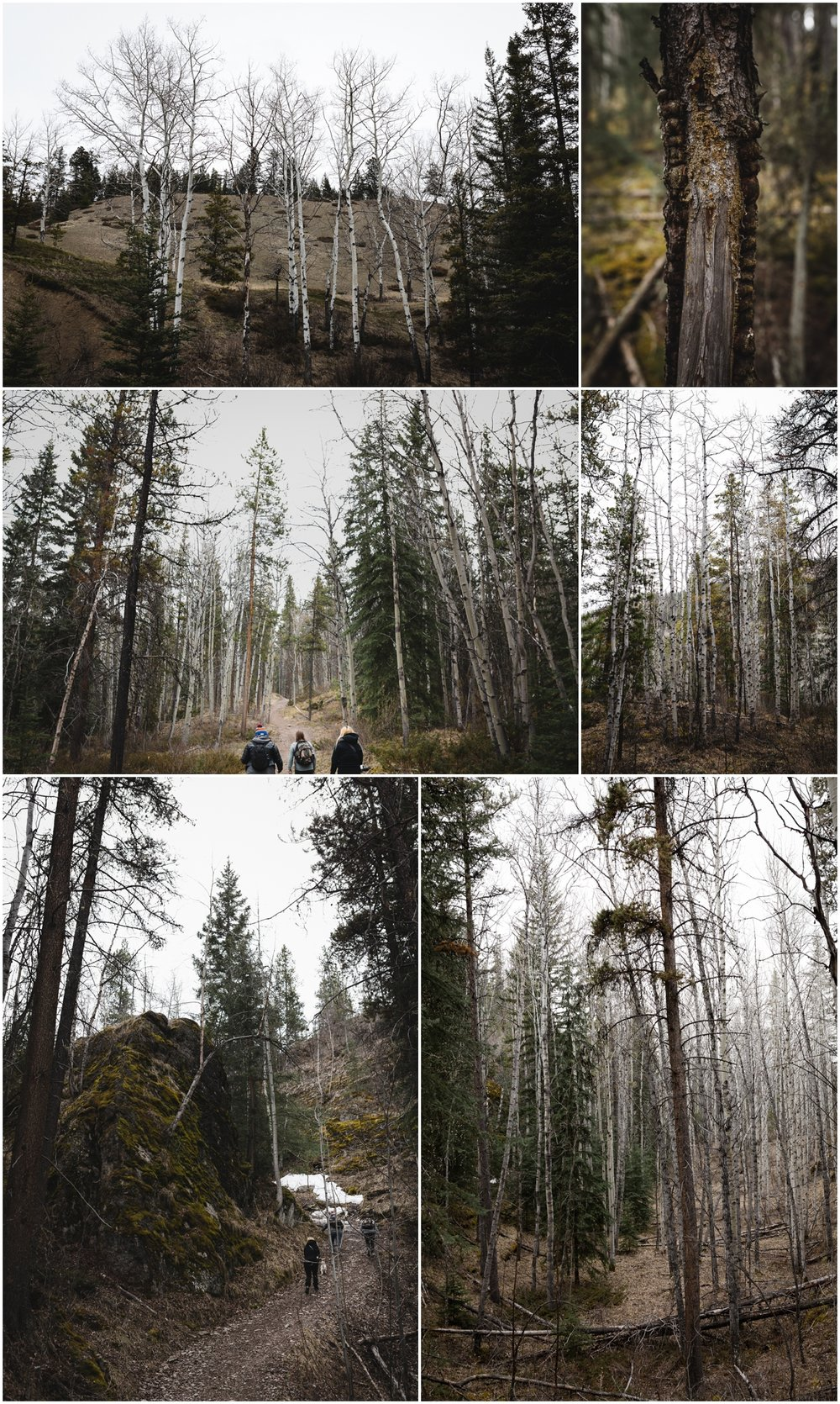 Jasper National Park Alberta Canada - Old Fort Point Hiking Trail - Rocky Mountains - Treelines Photography