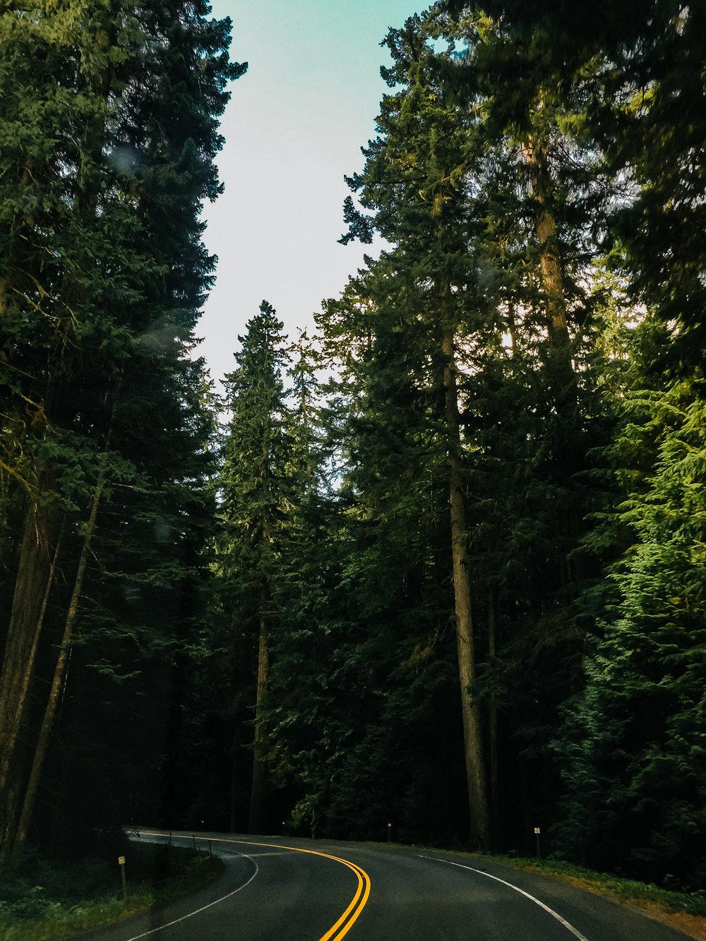 Treelines Photography - Landscape-49.jpg