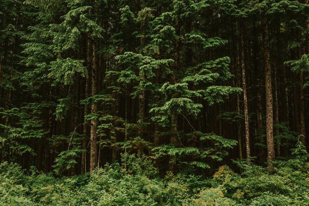Treelines Photography - Landscape-51.jpg
