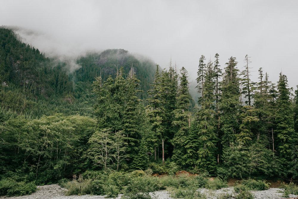 Treelines Photography - Landscape-52.jpg