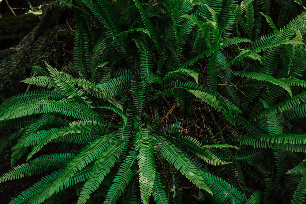 Treelines Photography - Landscape-56.jpg
