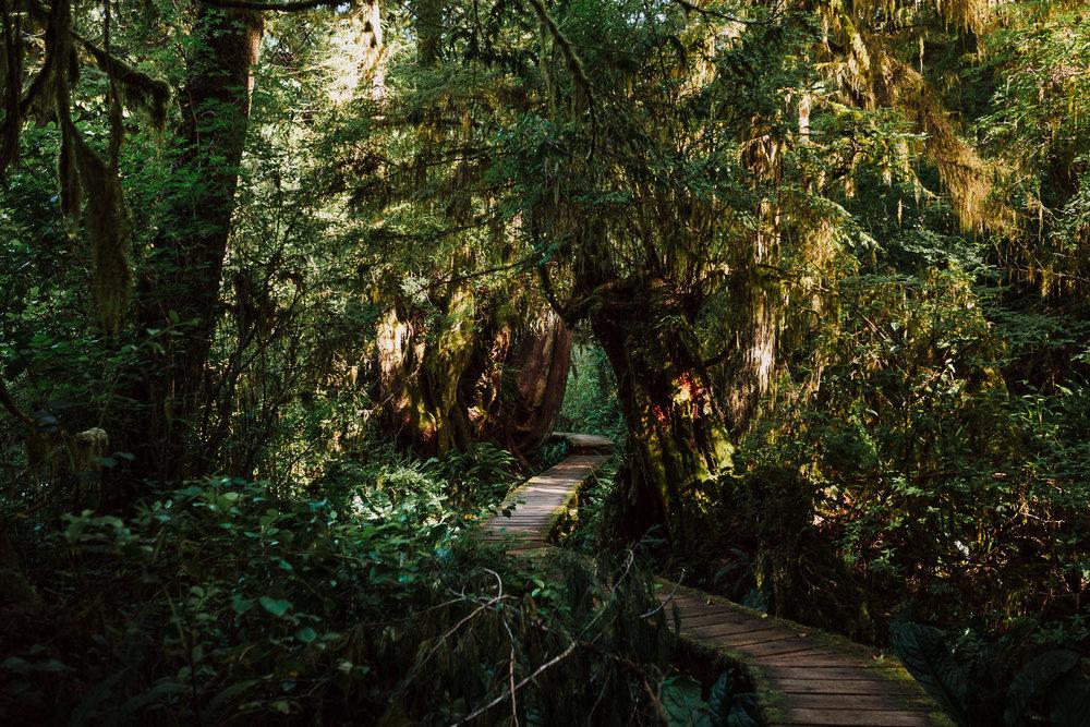 Treelines Photography - Landscape-57.jpg