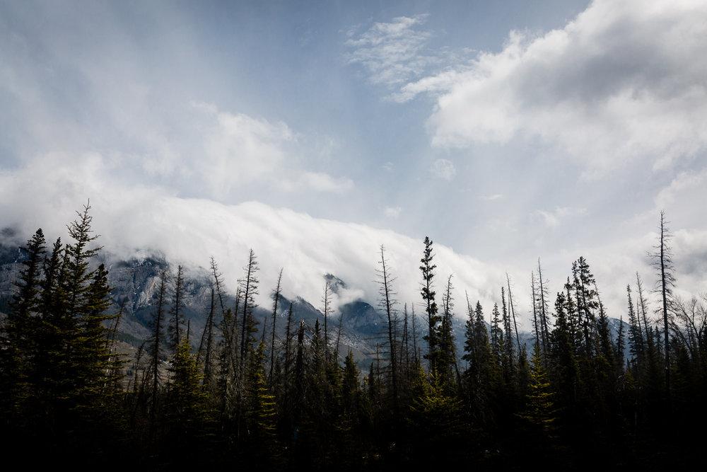 Treelines Photography - Landscape-29.jpg