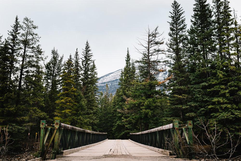 Treelines Photography - Landscape-33.jpg