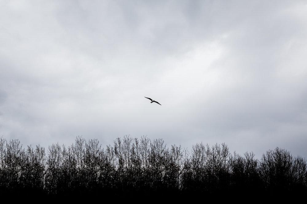Treelines Photography - Landscape-38.jpg