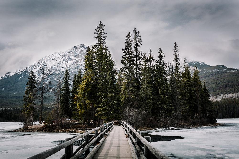 Treelines Photography - Landscape-32.jpg