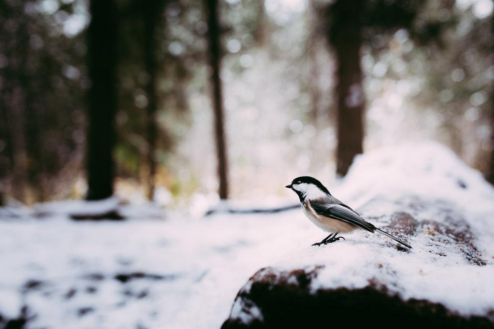 Treelines Photography - Landscape-11.jpg