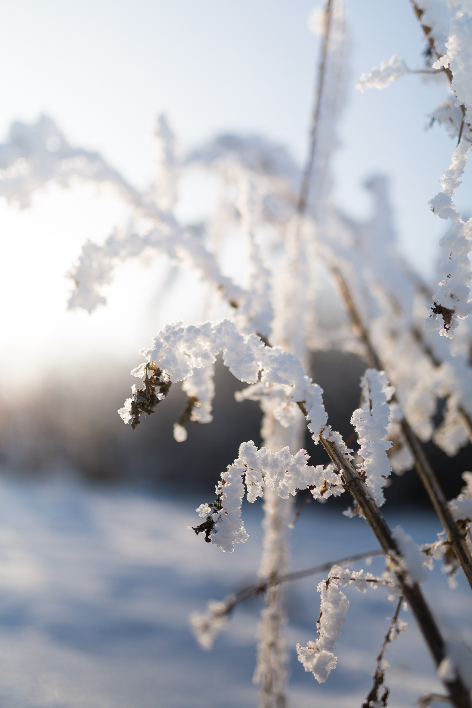 Treelines Photography - Landscape-12.jpg