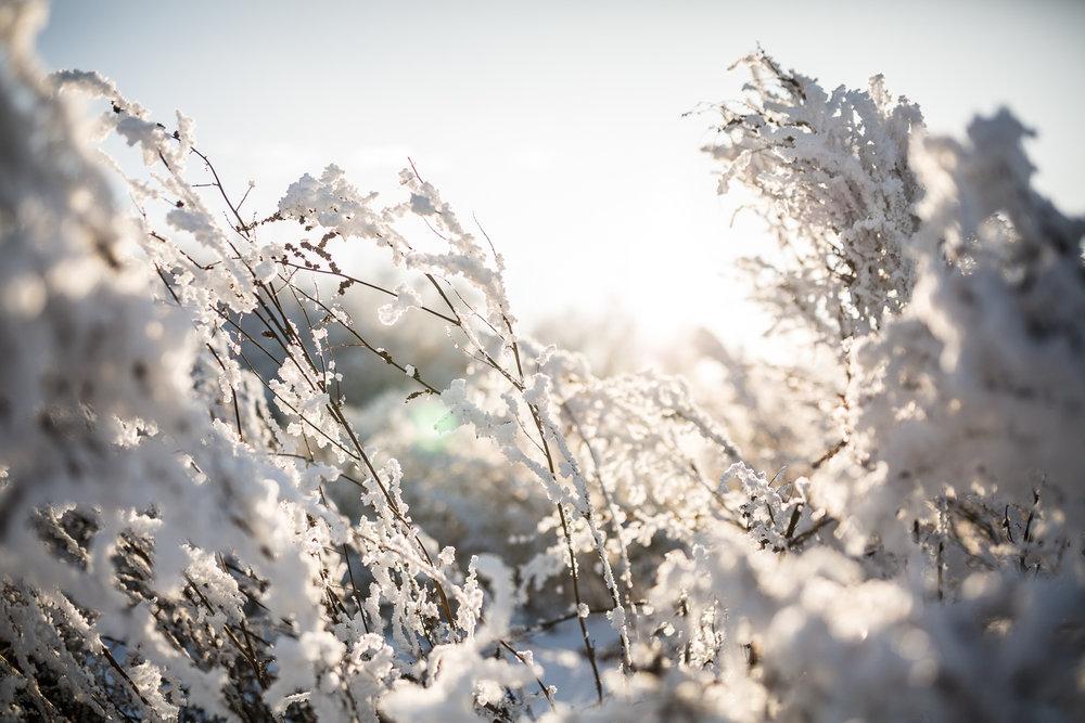 Treelines Photography - Landscape-13.jpg