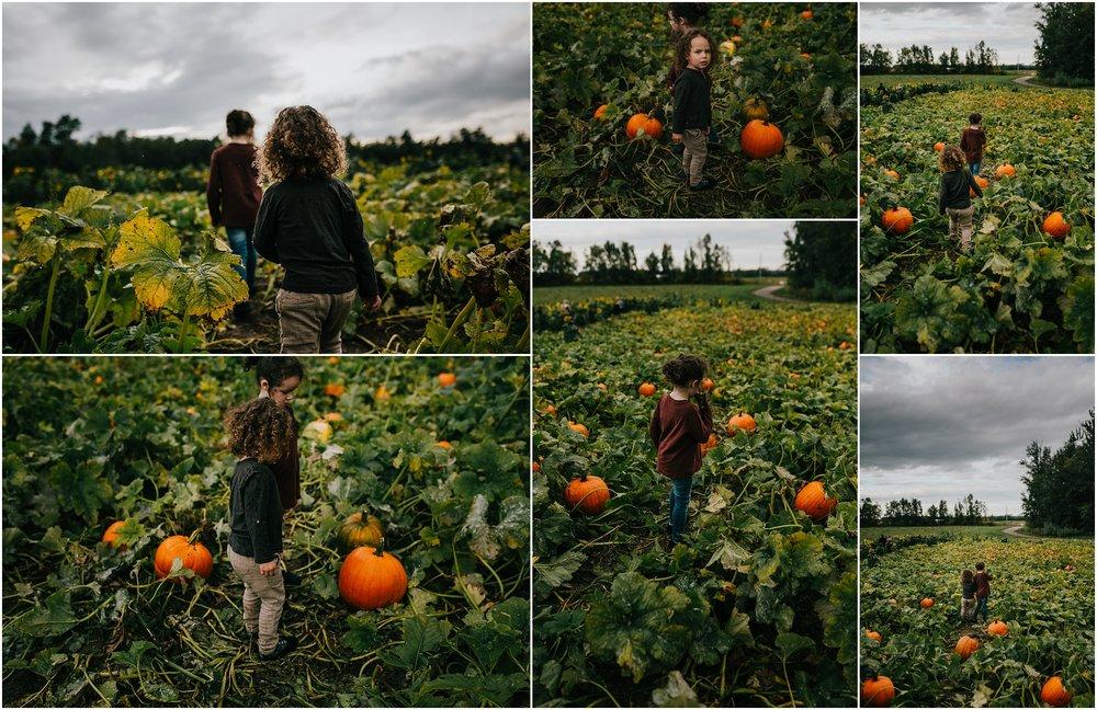 Edmonton Pumpkin Picking U-Pick - Edmonton Photographer - Treelines Photography - Edmonton Lifestyle Photographer