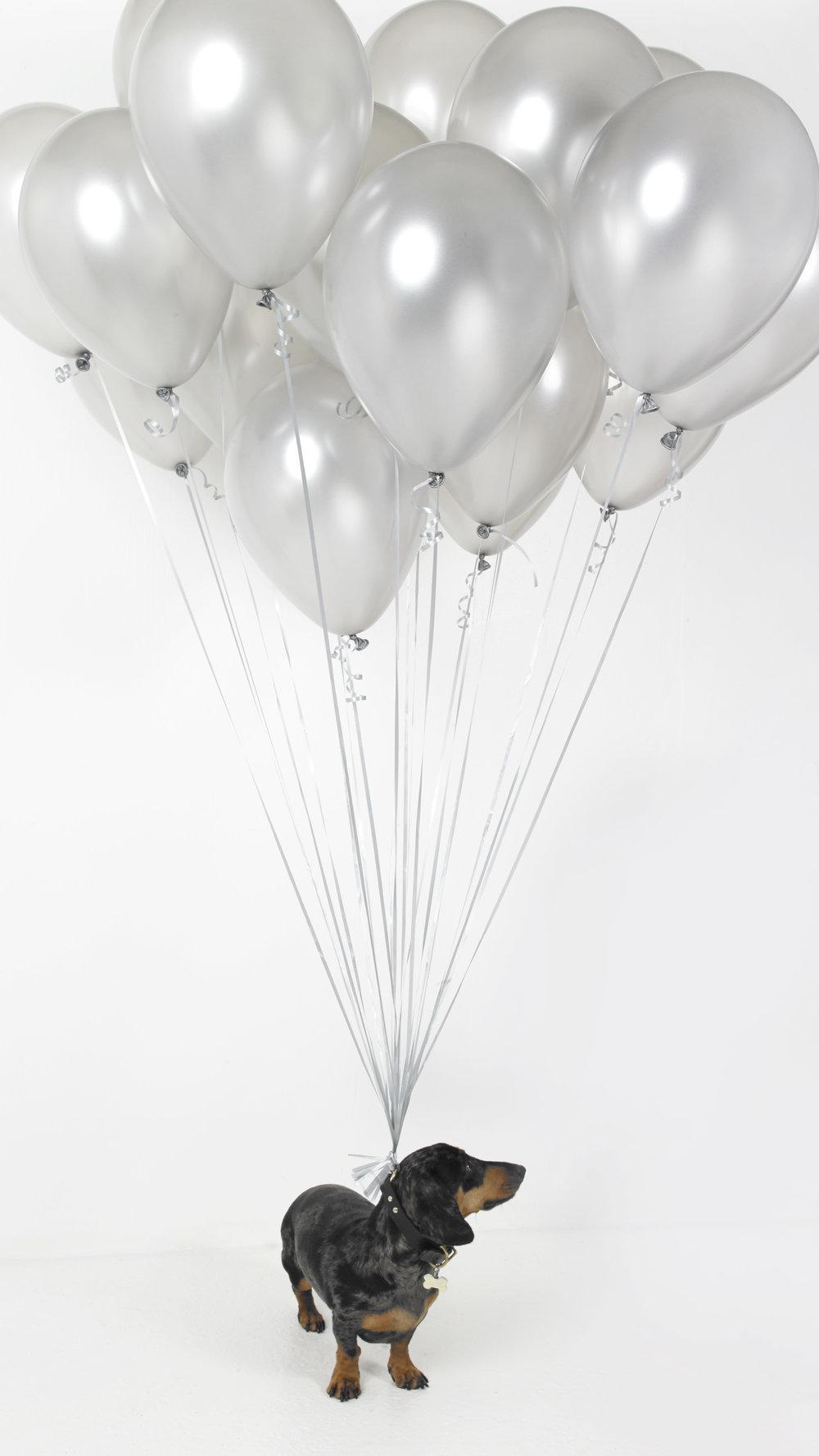 Balloon Bill