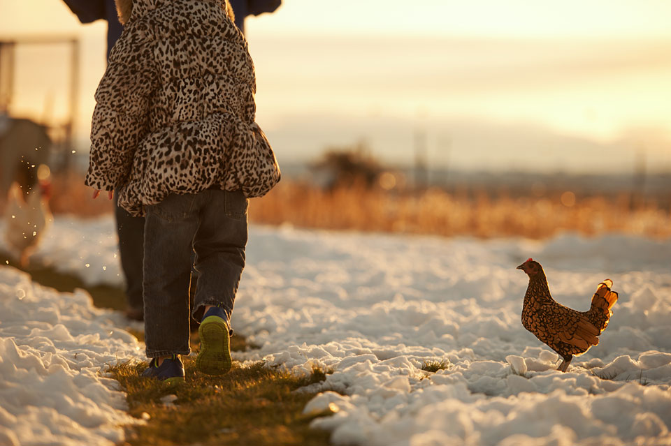 child-and-chicken-in-snow.jpg
