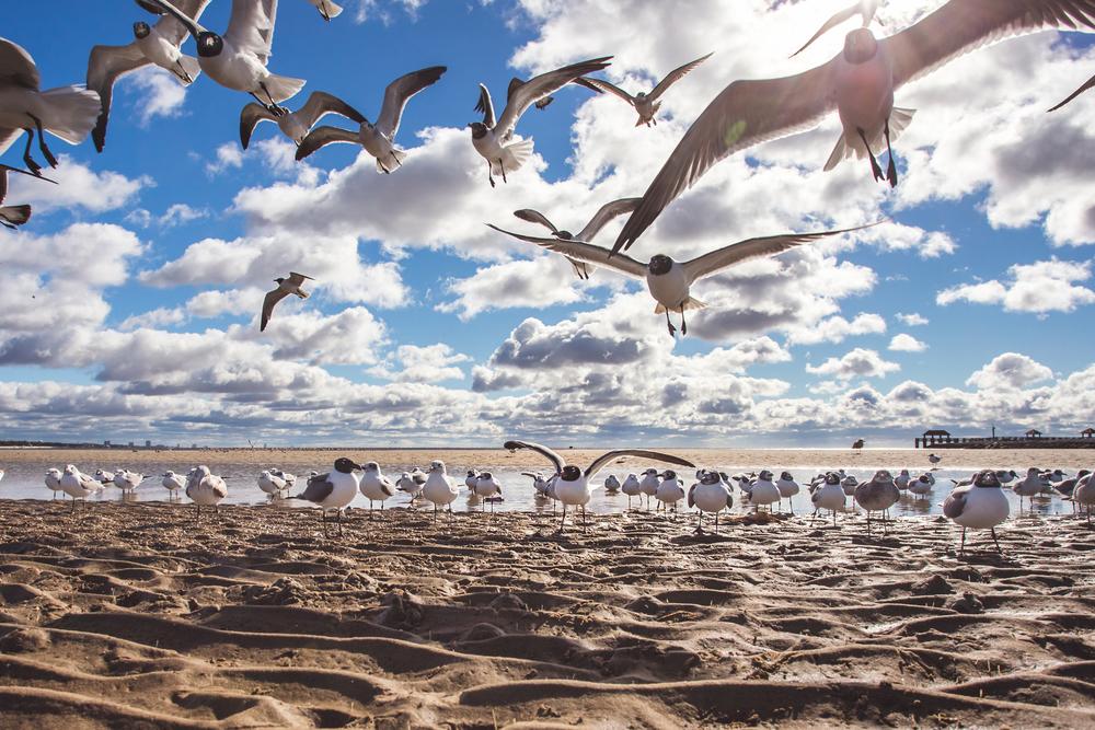 012_IMG_0104_seagulls.jpg