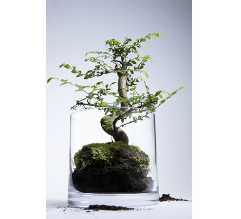 bonsai-shop.jpg