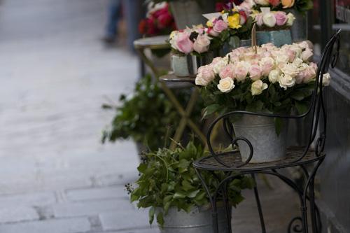 flowers-pia.jpg