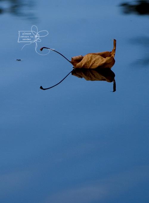 pjb_floating-leaf2.jpg