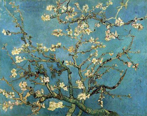 almond_blossom.jpg