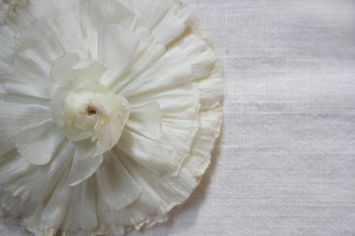 pjb_flower1.jpg