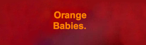 orangebabies3.jpg