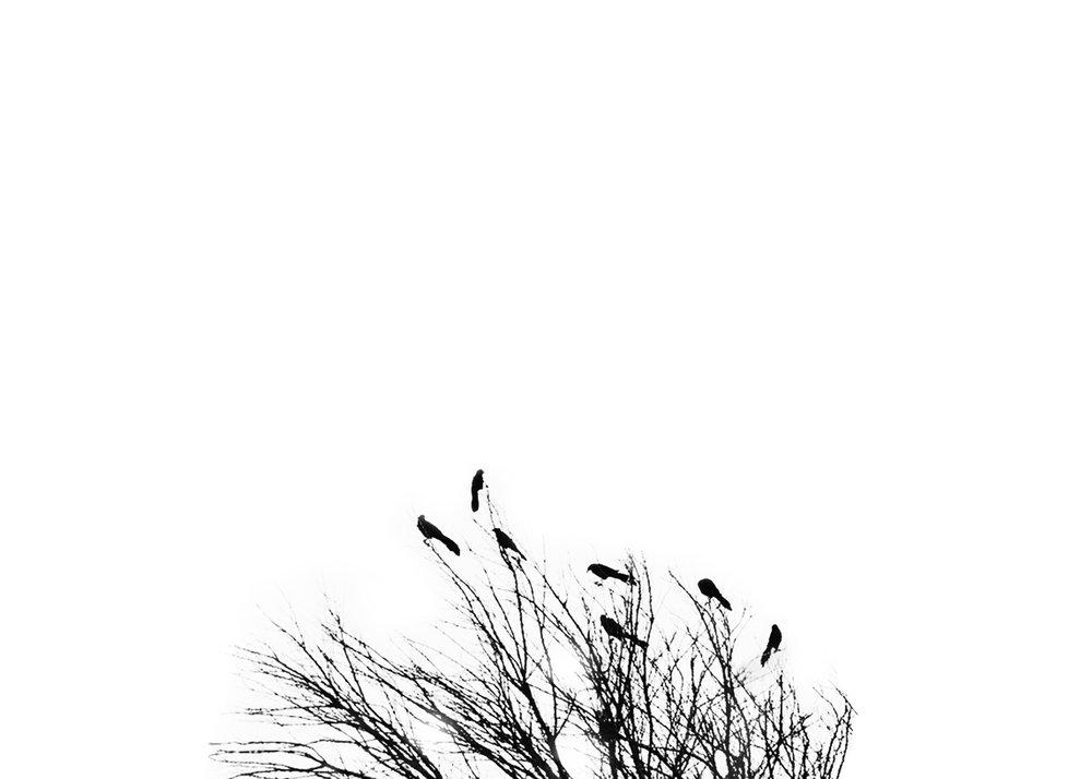 birds 2.jpg