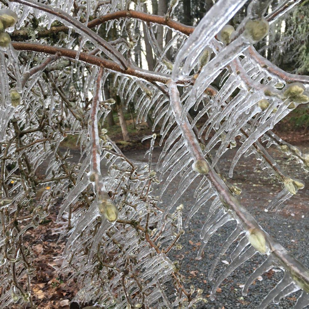 December ice storm 2016