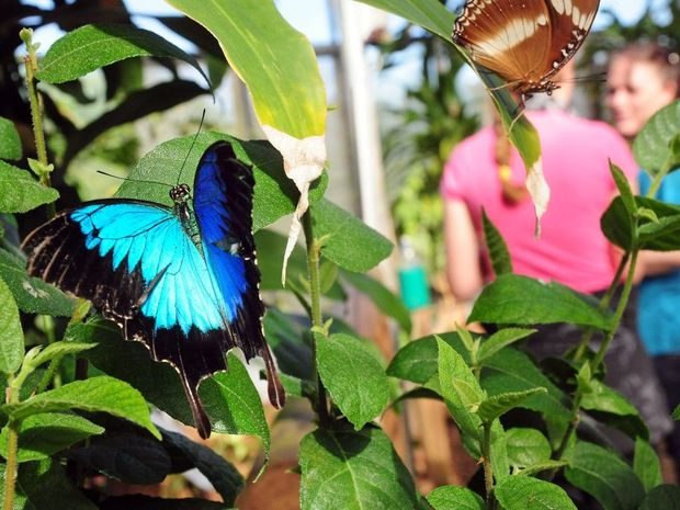 The Butterfly House gets you up close and personal with these fascinating creatures