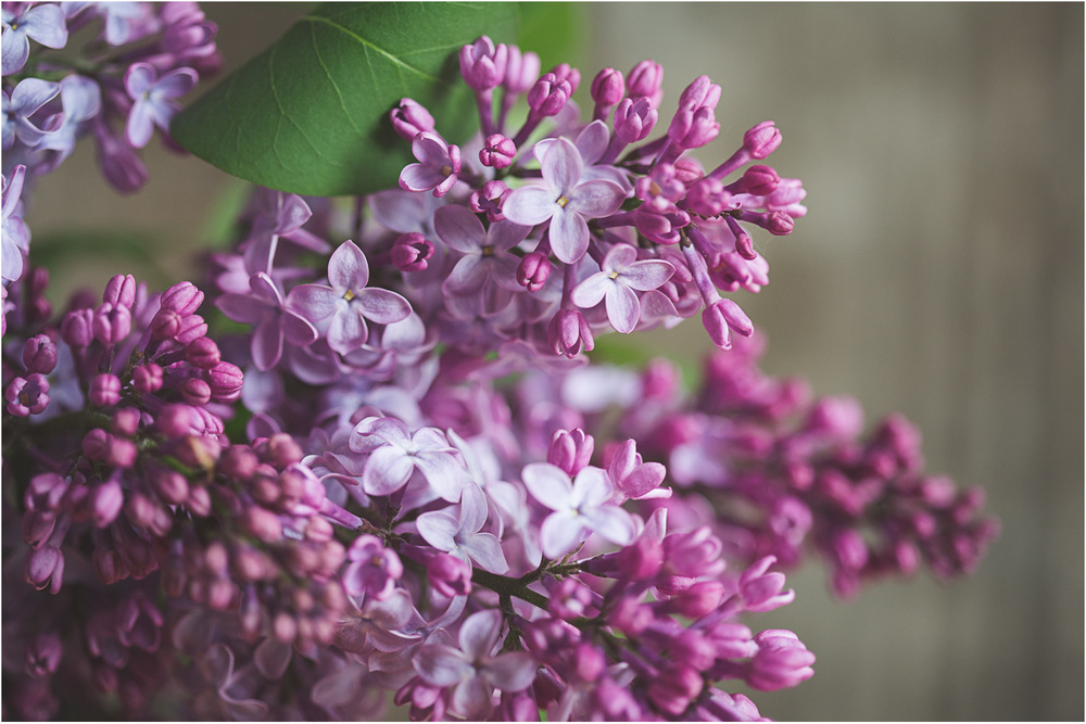 Bragg_Kate_Lilac_Indoor.jpg
