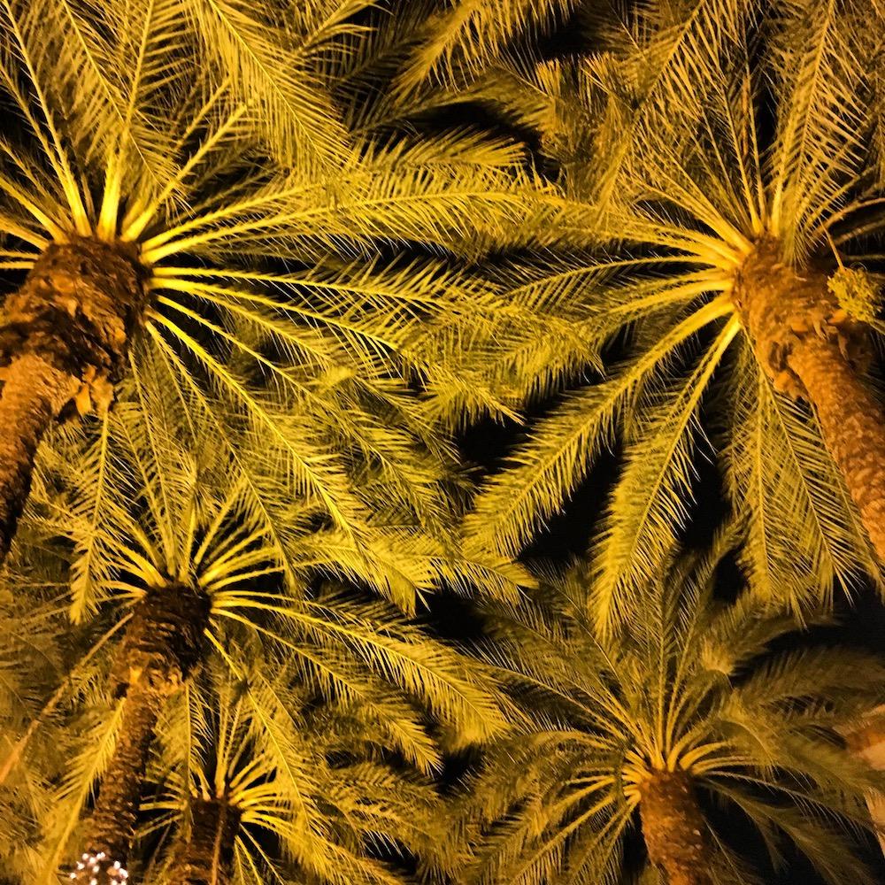 TRAVEL_AZ Palms.jpg