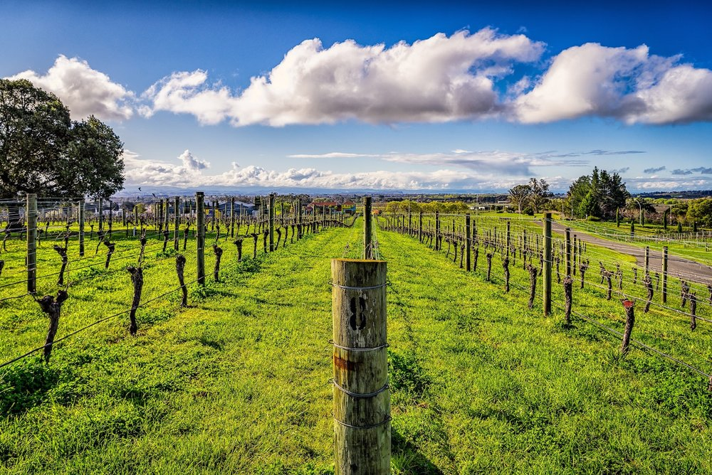 Hastings Wine Country in New Zealand