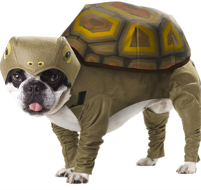 09_dogturtle.png
