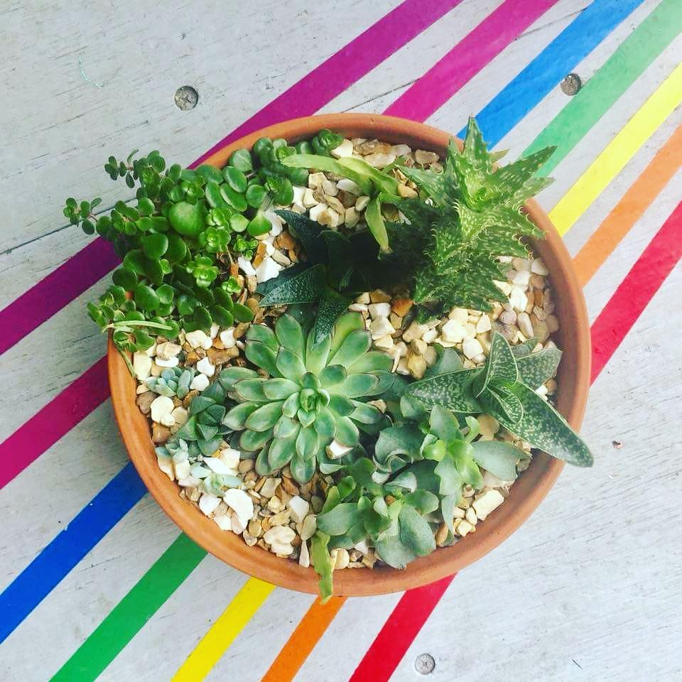 rainbow and plants.jpg