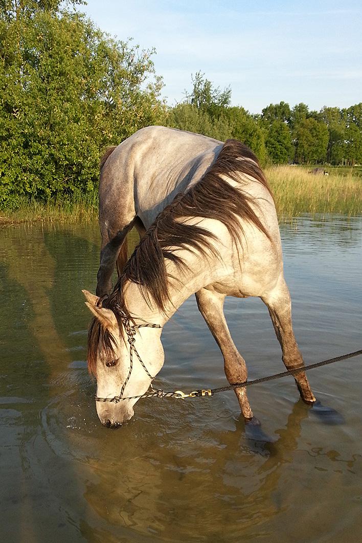 Oefenen met het inlopen van water