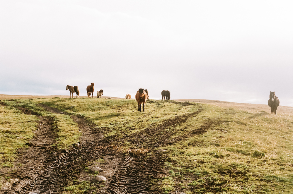 bicycling in Iceland-31.jpg