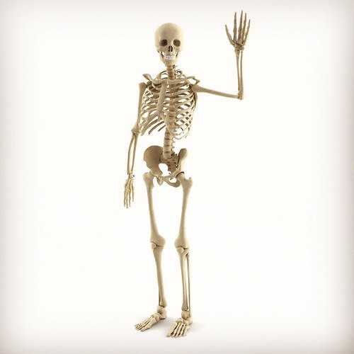 #WhatTheFactFriday #QuickFact Fact - Adult humans contain within them 206 bones.  But did you know that babies have more bones!  Babies are born with 270 bones. 🤔I wonder why... . . #skeleton #humanskeleton #anatomy #mrwolfslab #whatsyourlab #science #knowledgeispower