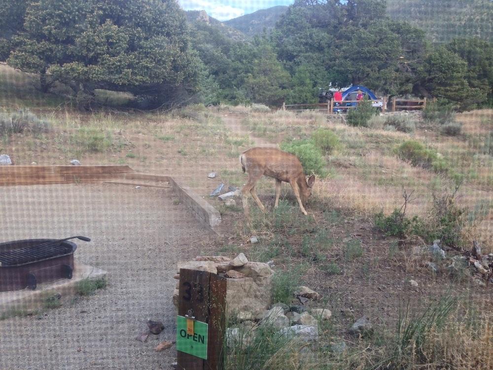 The deer had no fear.