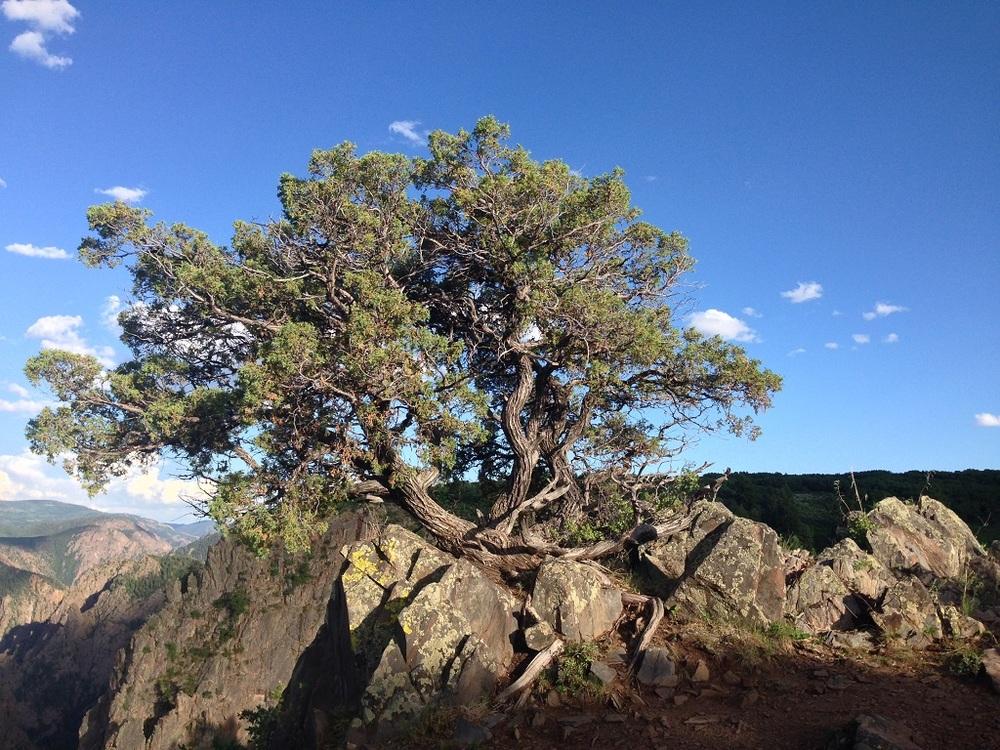 Van Gough-esq tree growing atop rocky terrain.