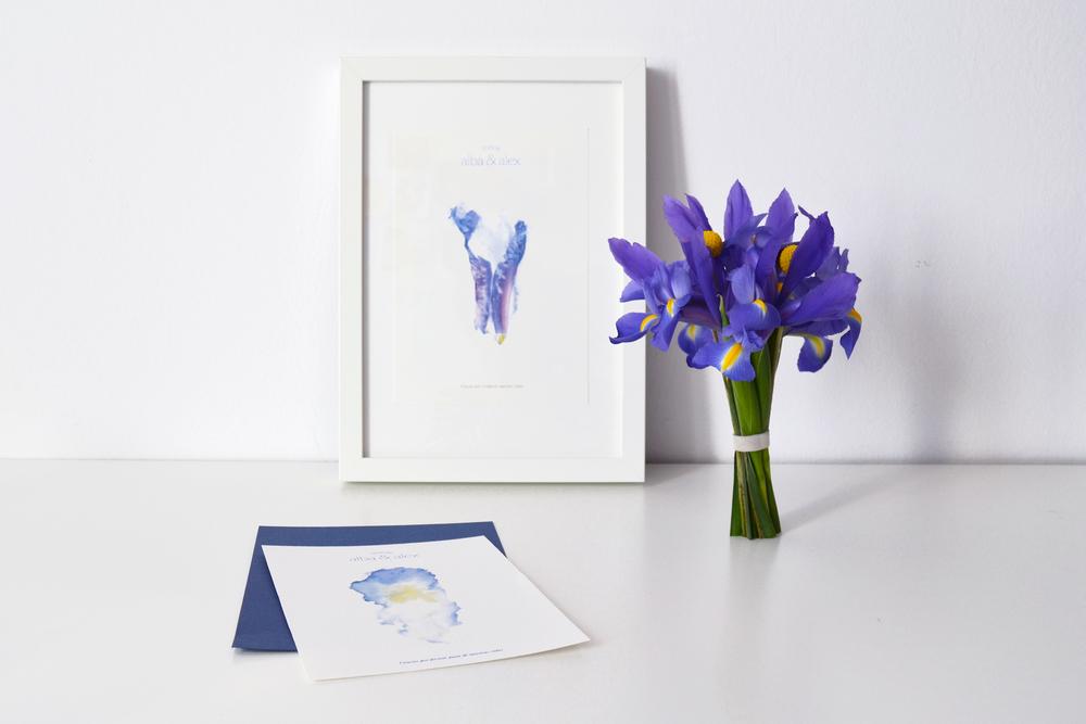 Colección iris. Modelo 1