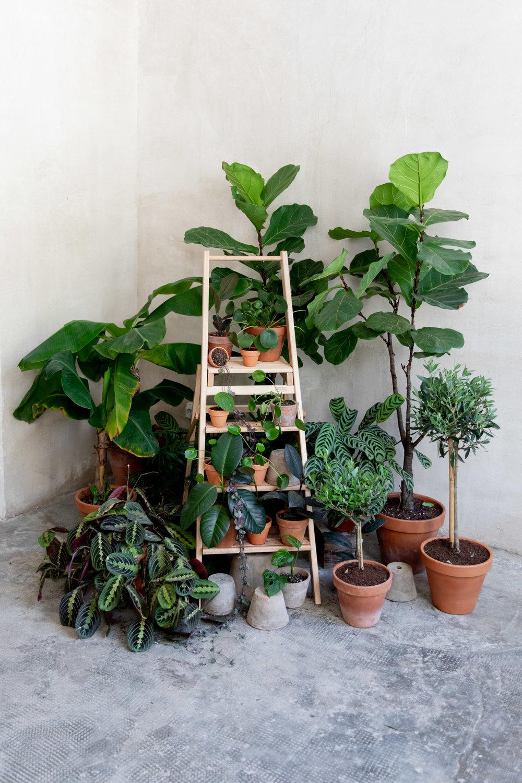 - Seleccionamos personalmente cada una de nuestras plantas