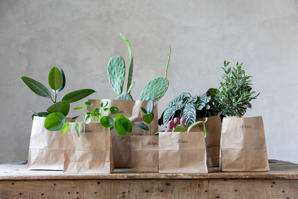 plantas pinterest barcelona.jpg