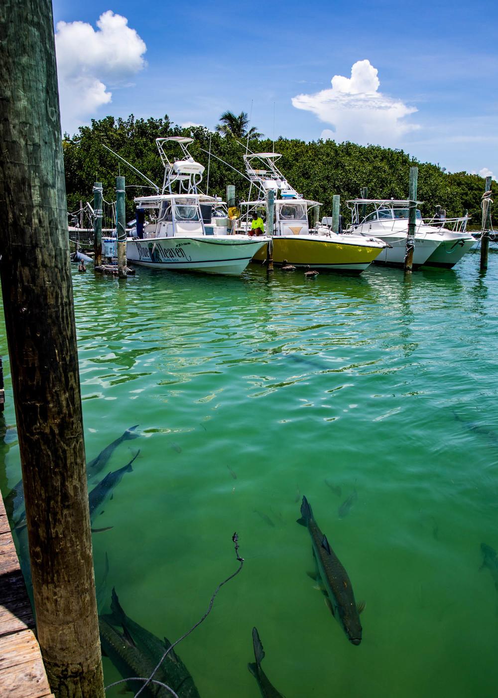 Key West-3.jpg