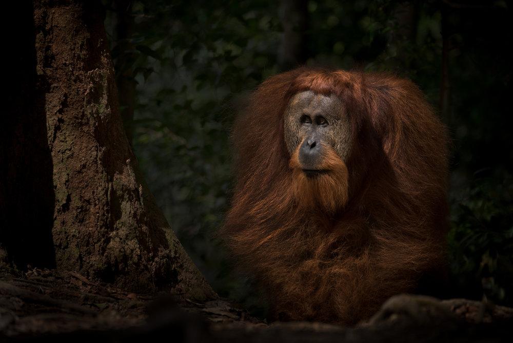 DanielleDaSilva_Sumatra-01521.jpg