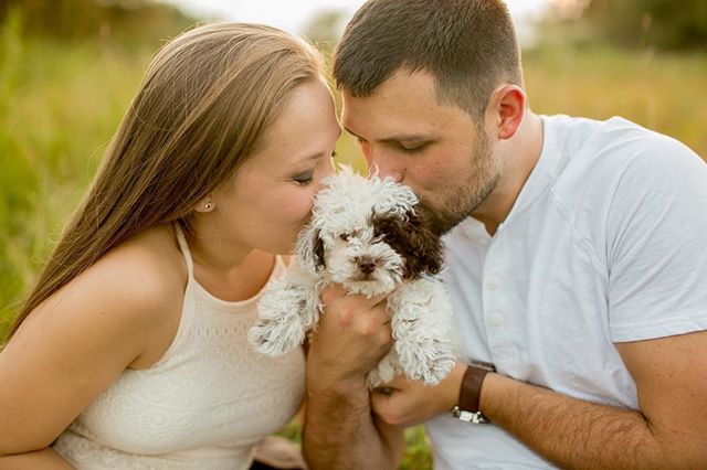 When your engagement session turns into a newborn puppy session, that's when you know you have the best couples ever!!!! Now excuse me while I go sob over how adorable this little baby is!!! 😭❤️🐶 #wildandwonderfulphotography #wildandwonderfulpuppies #puppies #puppyengagement #puppyengagementsession #engagements #wvweddingphotographer #wvweddings #goldenhour #doodles #poodles #dogengagementsession #wvengagementphotographer
