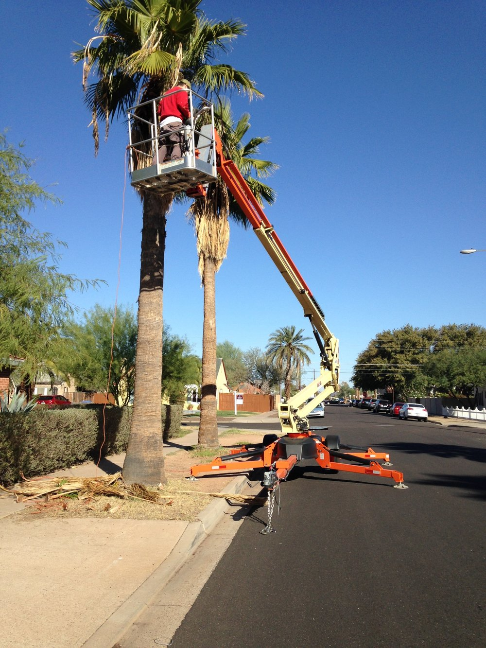 Who else would rent a 50 ft. boom lift to trim palm trees?