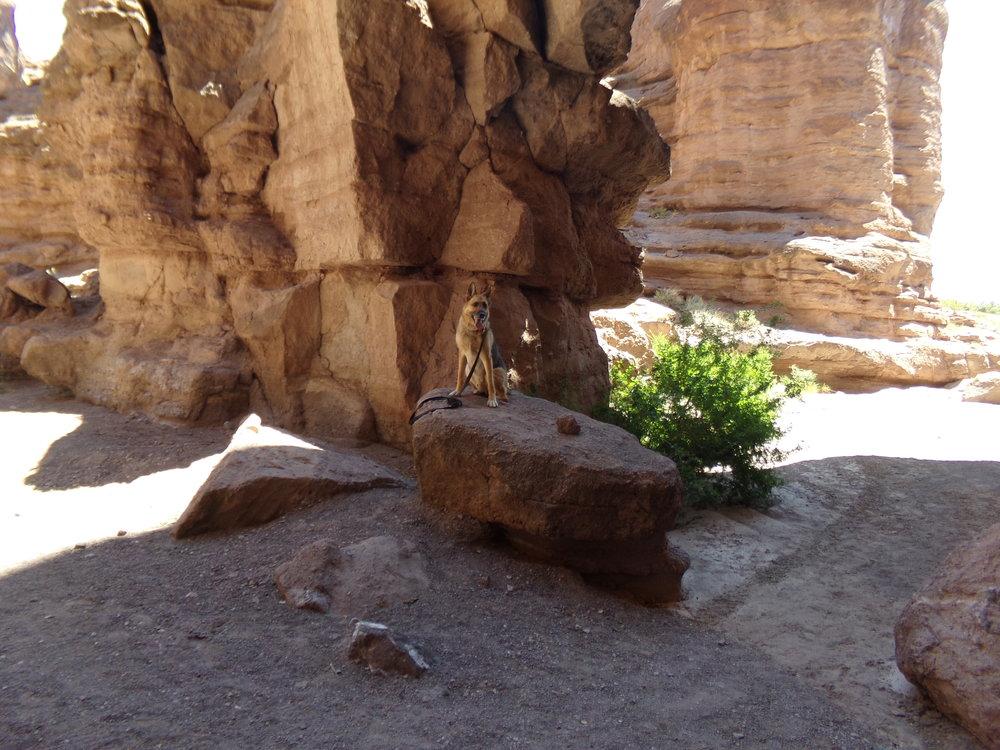 Baron on a Rock