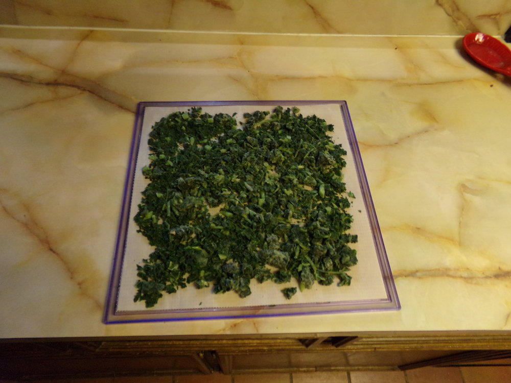 Greens on the Dehydrator Tray