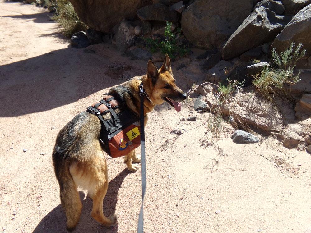 Adventure Dog!