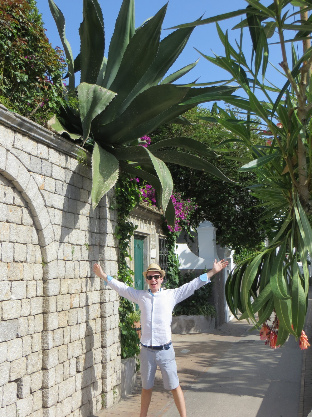 This Agave seemed to be defying the laws of gravity.
