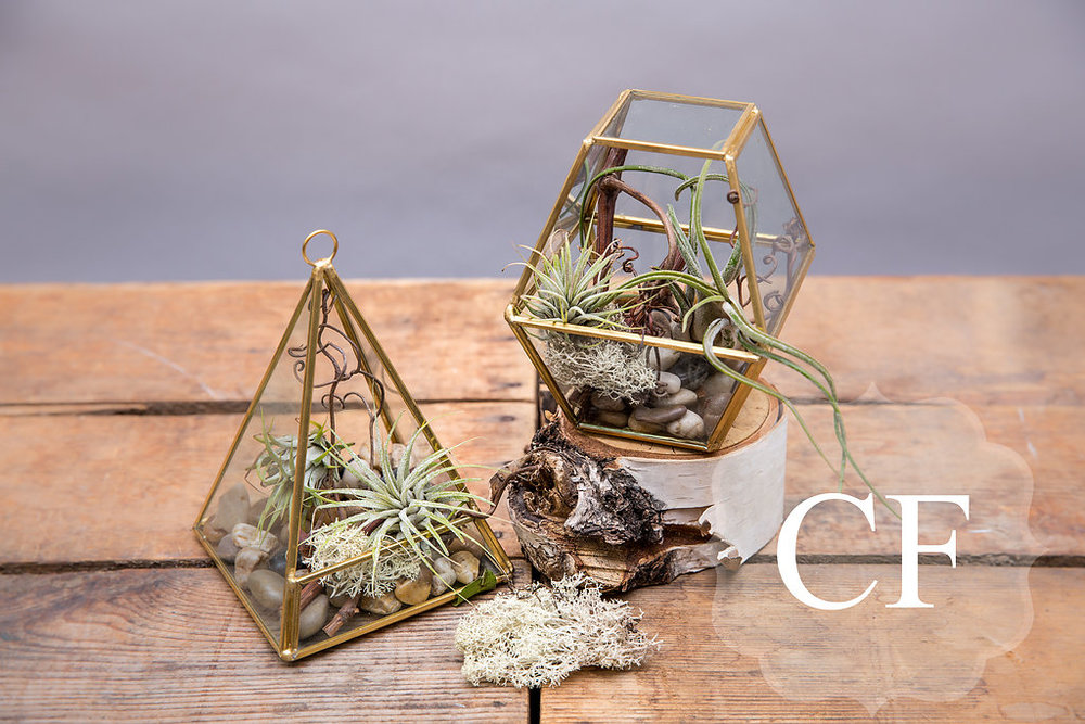 Chic Terrariums - Miniature airplant terrariums $49. Elegant and modern these are great for a young and stylish teacher.