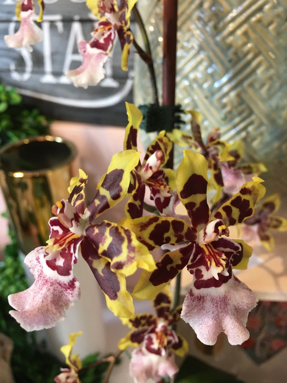 Fragrant Orchids - We bring in exotic varities when we can!